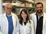 Da Brescia una ricerca mondiale nella lotta contro il mieloma