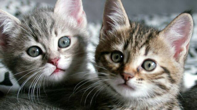 Torbole Casaglia lancia gatti da auto in corsa Tre muoiono