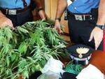 Isorella coltiva marijuana e spaccia droga dalla cascina in arresto