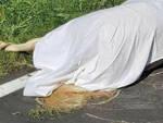 Lonato cavallo morto investito da auto Il fantino è grave in ospedale