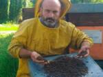 Bassa Bs milioni di api morte negli alveari Una morìa mai vista prima