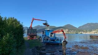 Alghe Macrofite sul lago d'Iseo: raccolte e smaltite 500 tonnellate