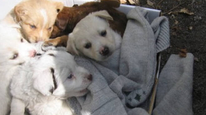 Bione cuccioli abbandonati in una cassetta Due muoiono