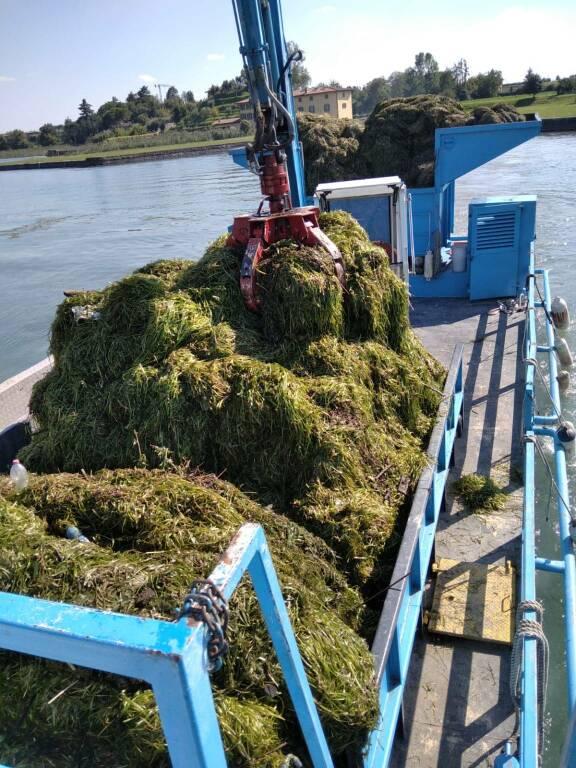 Lago d'Iseo: battello spazzino raccoglie 500 tonnellate di alghe