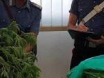 Montirone coltiva marijuana in casa 27enne denunciato