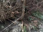 Pisogne e Val Palot boschi nel mirino di vandali e pericoli