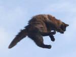 Rovato sorpreso a lanciare un gatto nel torrente Ora rischia