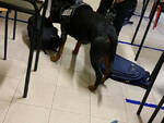 Lumezzane controlli antidroga della Polizia in due scuole superiori