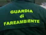 Treviso Bs dalla vegetazione emerge deposito abusivo di mezzi