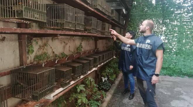 bracconaggio carabinieri forestali