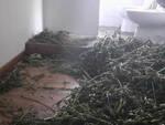 Calcinato carabinieri trovano laboratorio dove si lavora la marijuana
