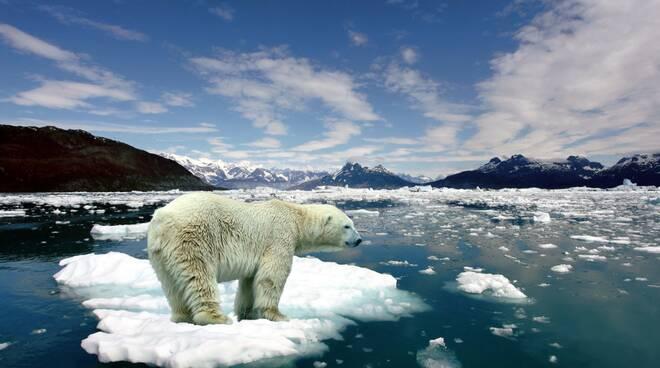 orso polare cambiamenti climatici