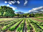 agricoltura biologico