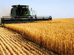 agricoltura cereali