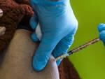 Vaccino antiCovid in Lombardia da oggi il numero verde per gli over 80