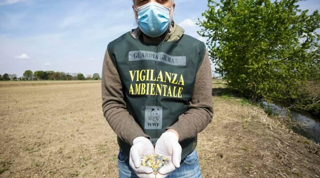allarme veleni nelle campagne lombarde
