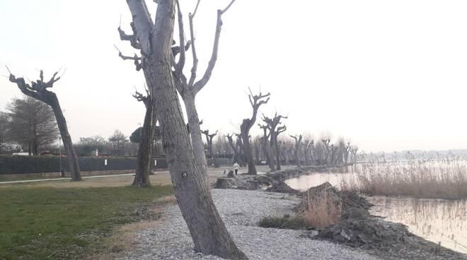 Zona umida Brema Sirmione canneti del Garda