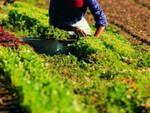 lavoratori agricoltura