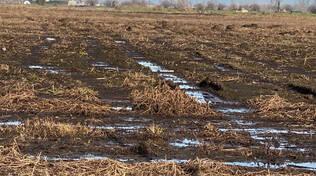 liquami inquinamento agricoltura allevamento