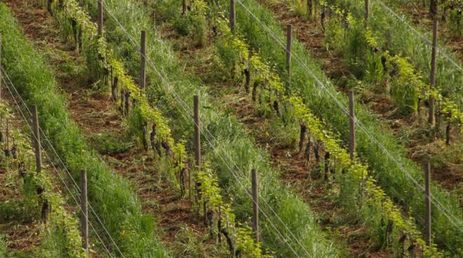 Sincette presenta Le Zalte 2018, top wine Valtenesi