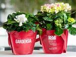 gardenia sclerosi multipla