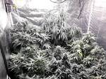 marijuana a desenzano