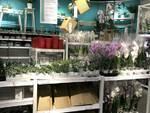 Plant Box ikea Brescia con Maremosso Onlus