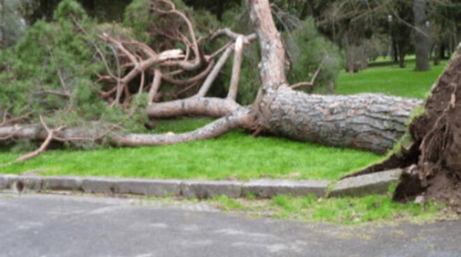 maltempo alberi tromba d'aria