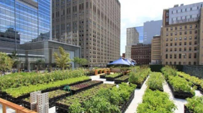 agricoltura urbana bosco urbano