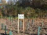 bosco urbano Milano agricoltura urbana