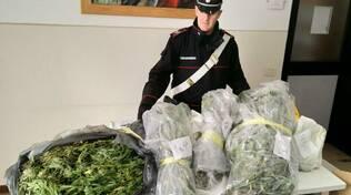marijuana in garage di marcheno, tre arresti